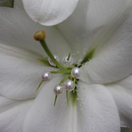 mit Perlen geschmückte Blüte weiß - Hochzeit - Blumen Eder