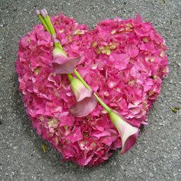 Trauerherz mit rosa Hortensien und Calla - Trauerfloristik - Blumen Eder Rosenheim