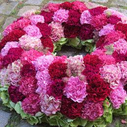 Nelkenkranz - Trauerkranz mit Nelken - pink - Blumen Eder Rosenheim