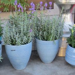 Keramiktöpfe für Pflanzen - Blumenhaus Eder